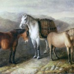 William Shiels, West Highland Ponies