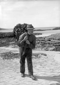 Archie MacEachern, Kinsadel, Arisaig c 1910, carrying seaware. Scottish Life Archive