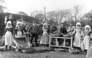Potato dressing at West Pilton Farm, near Edinburgh, 1913-14. Scottish Life Archive