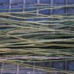 bramble stems